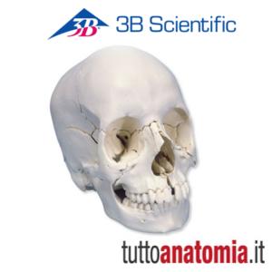 cranio 2