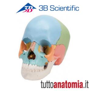cranio 3